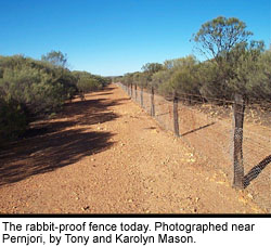 The rabbit-proof fence today. Photographed near Pernjori, by Tony and Karolyn Mason.